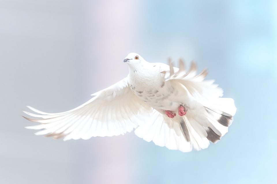 ZN pozvali države k dodatnemu financiranju pobud za izgradnjo miru