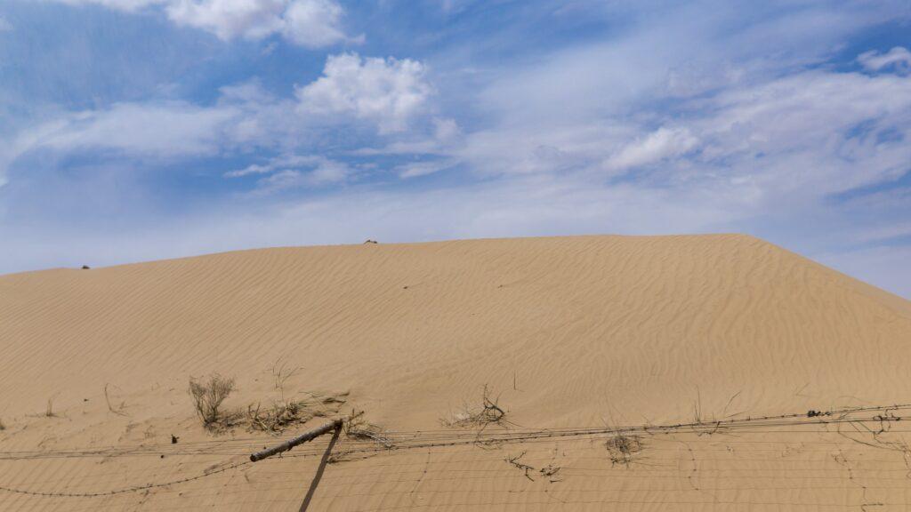 Veliki zeleni zid za izboljšanje življenja v Sahelu dobiva nov zagon
