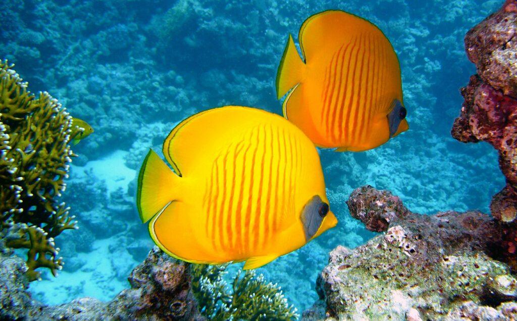 V Sredozemskem morju vse več tropskih rib